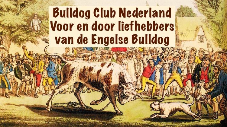 bull-baiting2