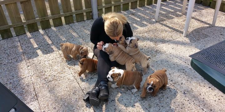 Puppies beschikbaar bij JosaBulls