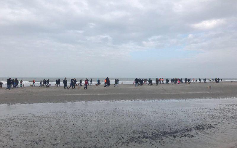 Bullenwandeling Bulldogclub Nederland een groot succes!!!