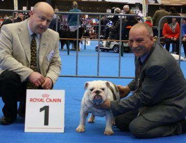 242-05-01-2017-int-dogshow-eindhoven-1-th-excellent-intermedaire-class-judge-mr-paul-lawless-ie