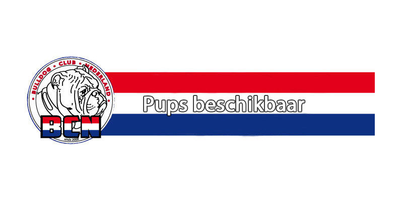 Pups beschikbaar bij kennel Adventure to Live.
